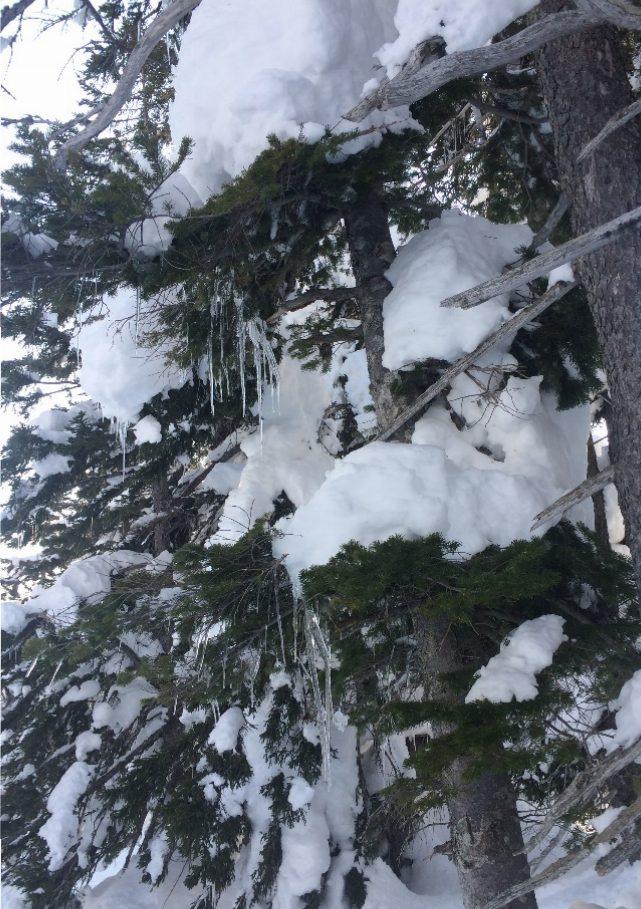 樹氷と氷柱