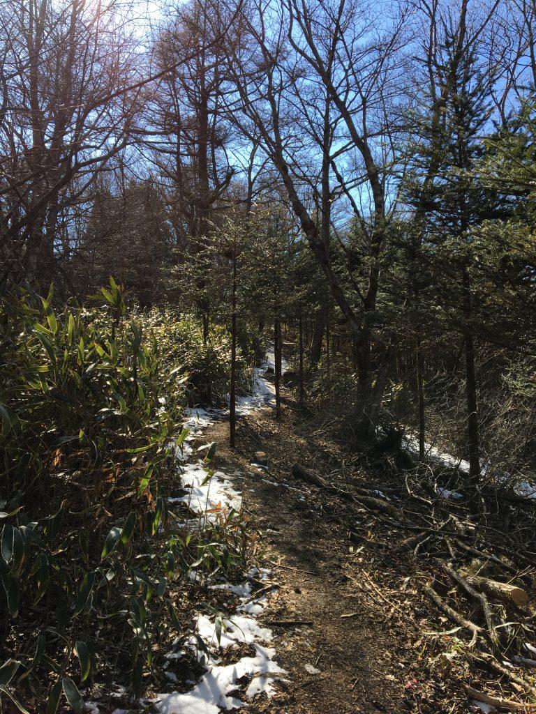 石割山トレイルの残雪
