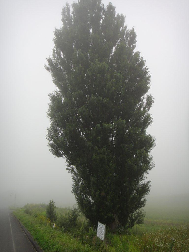 ケンとメリーの木その2
