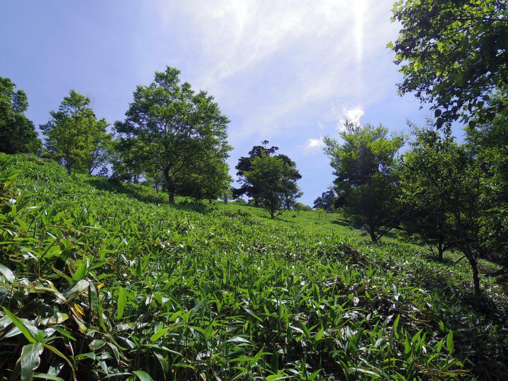 剣山トレイルと太陽