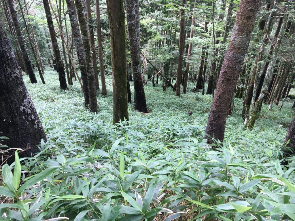 大台ケ原の森