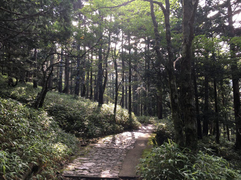 大台ケ原の森その2