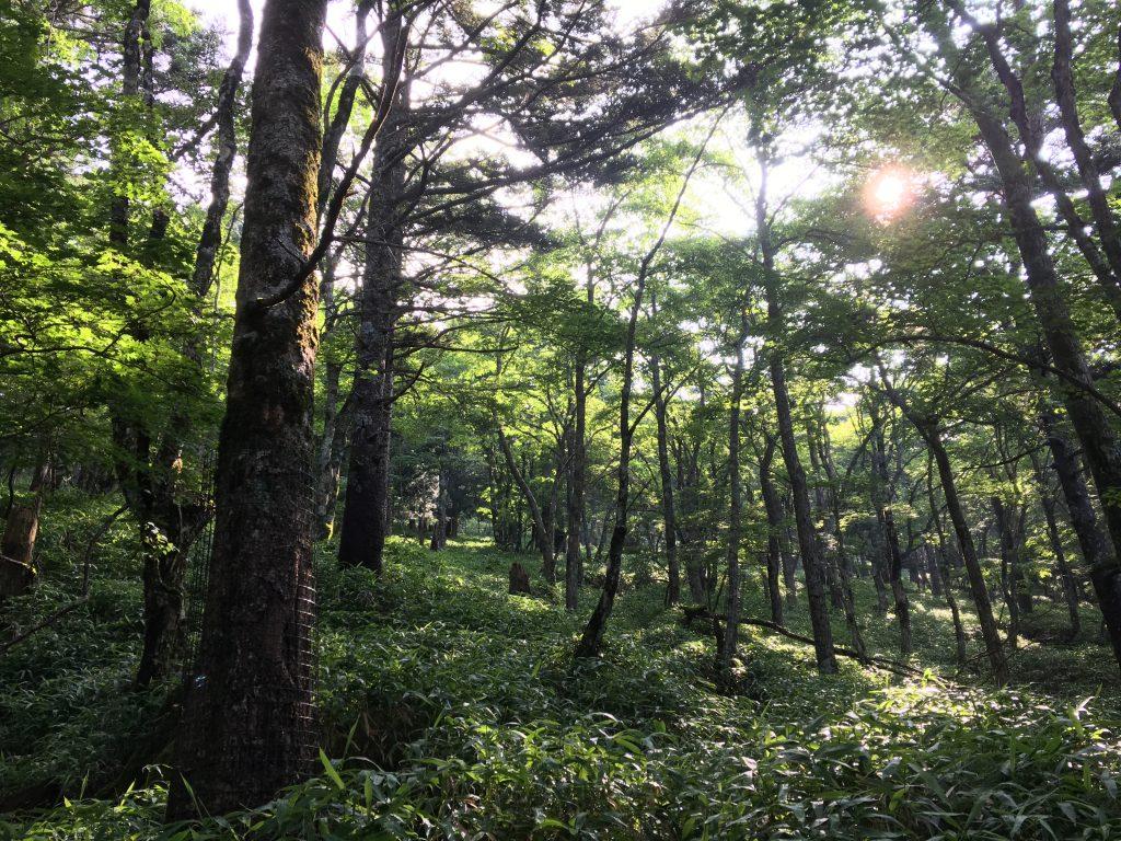 大台ケ原の森その3