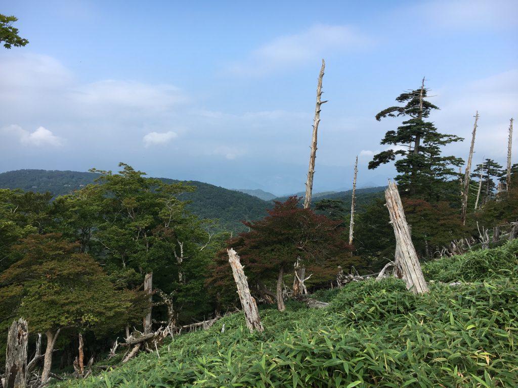 日出ヶ岳付近の立ち枯れの木
