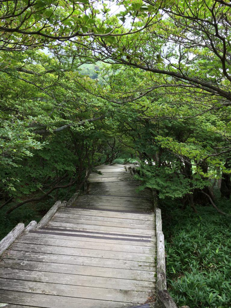 日出ヶ岳からの木道