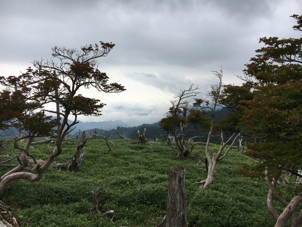 正木峠の立ち枯れの木