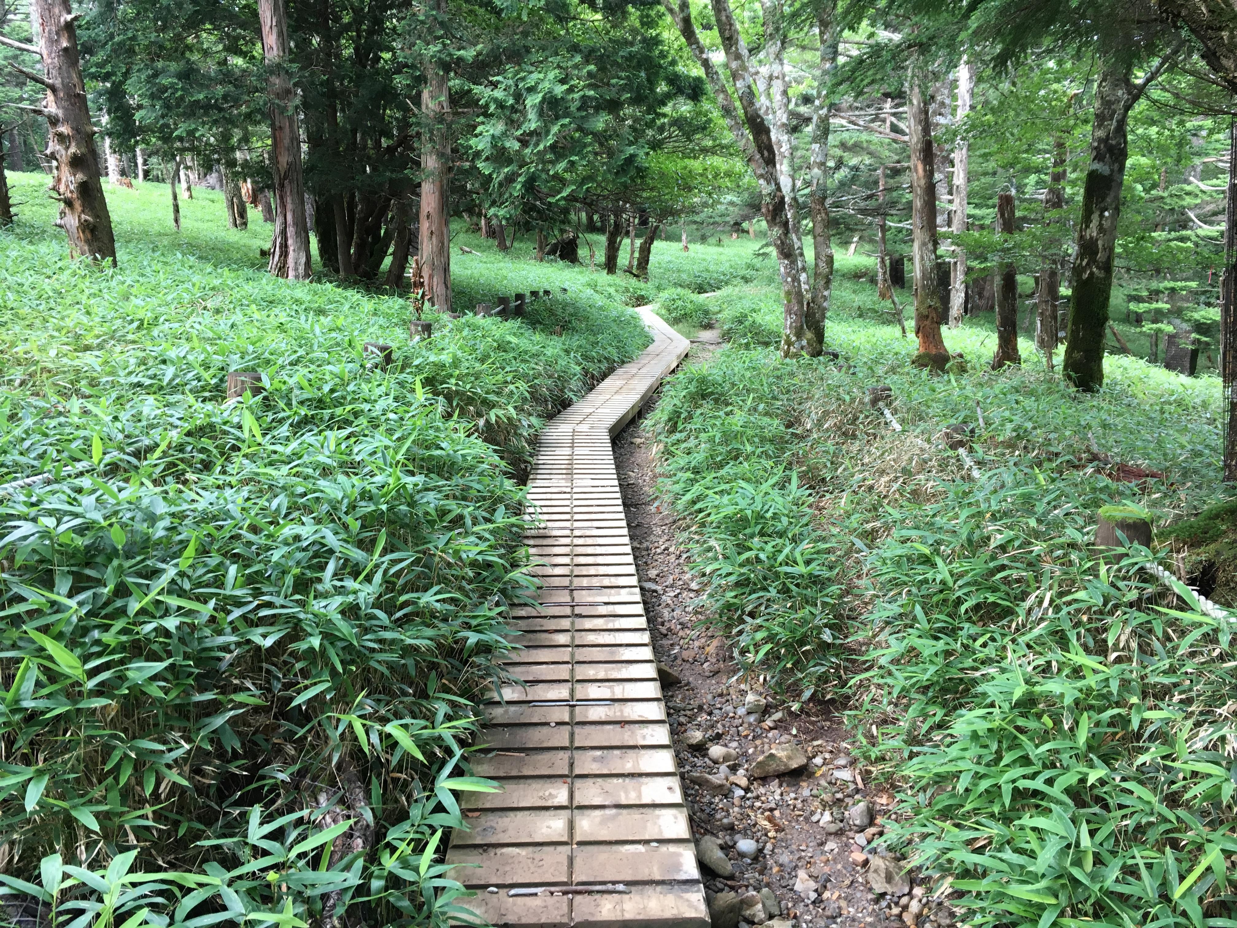 大台ケ原の木道