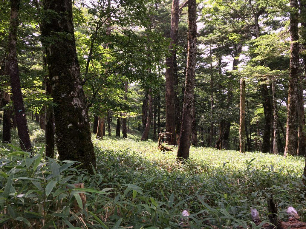 コースラストの大台ケ原の森
