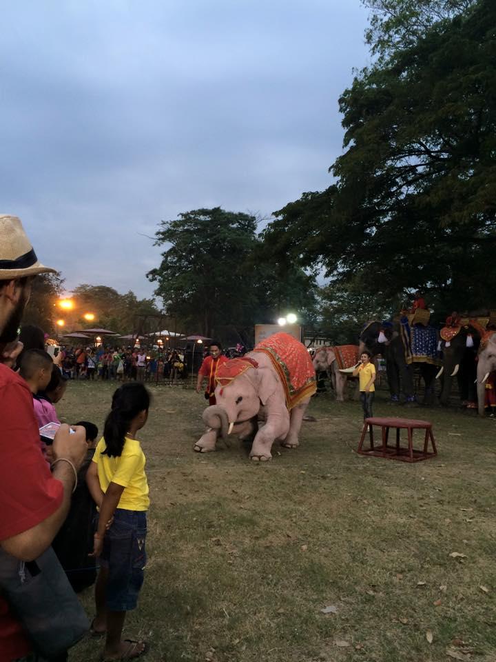 お辞儀する象さん