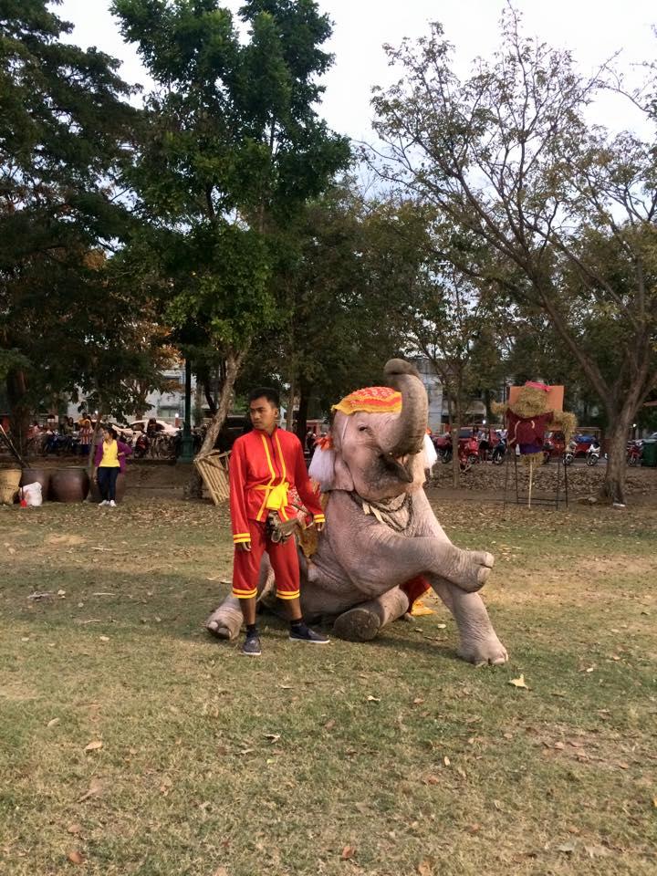 腕を組む象