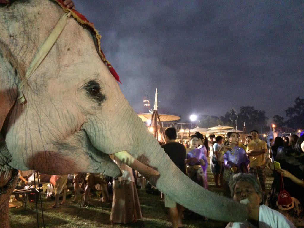 おひねりをもらう象