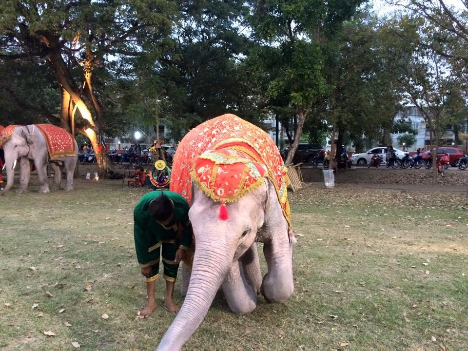 お礼する象
