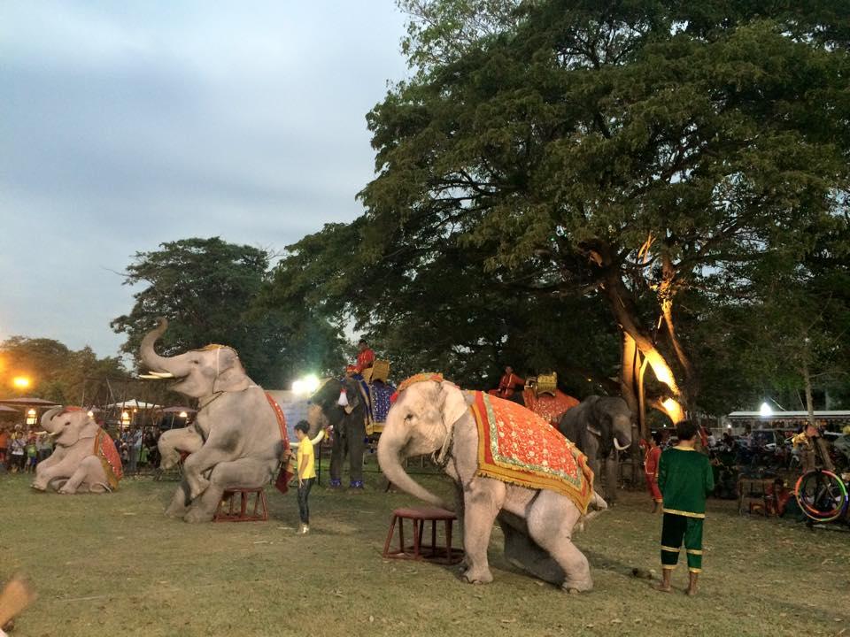 腰をかける象