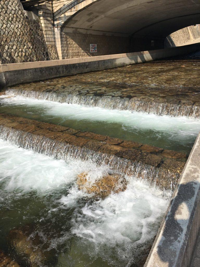 鮎もいる天井川