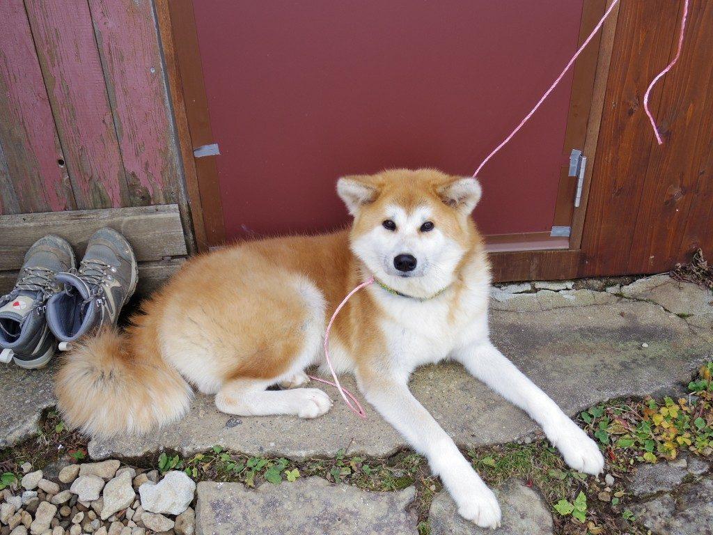 弘法清水小屋の犬