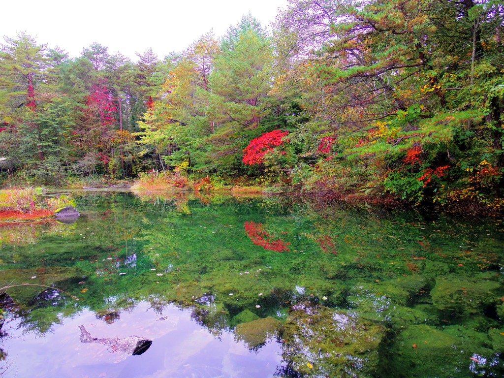 ホテリ・アアルトの中にある沼と紅葉