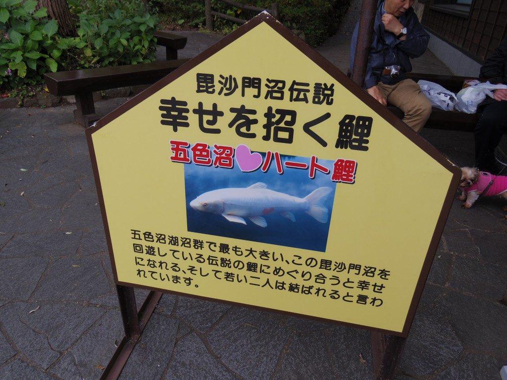 毘沙門沼伝説五色沼ハート鯉