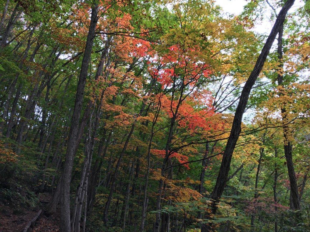 中津川渓谷の真っ赤な紅葉