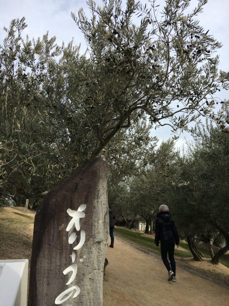 オリーブの木その2