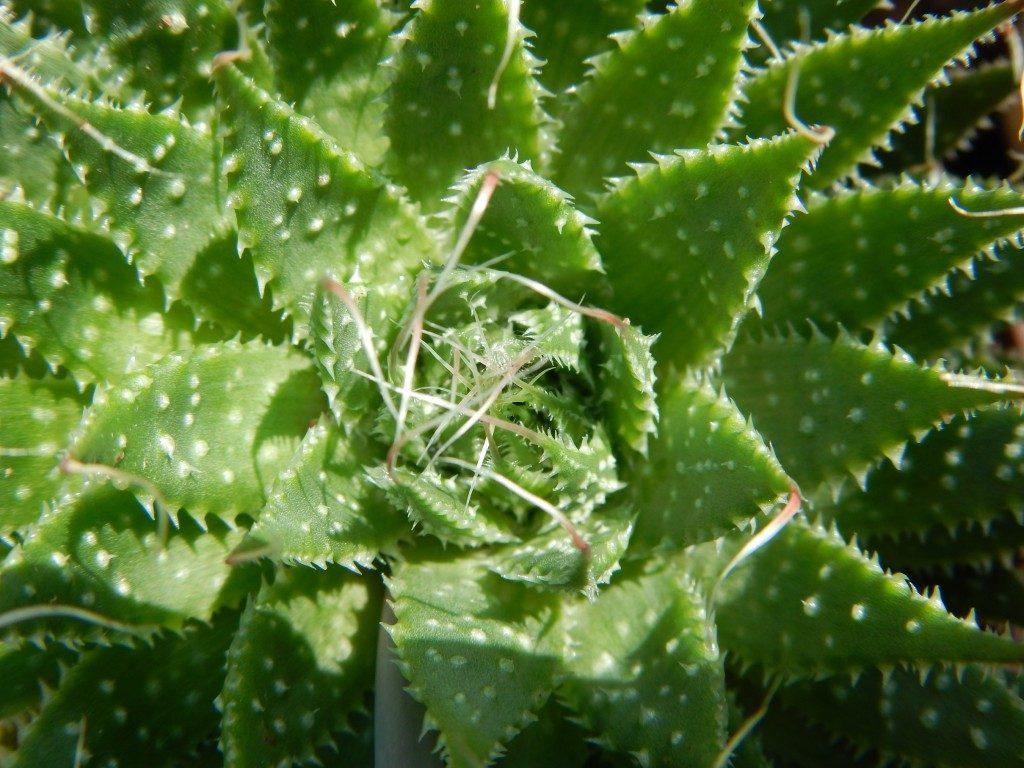 イタリアの植物その2