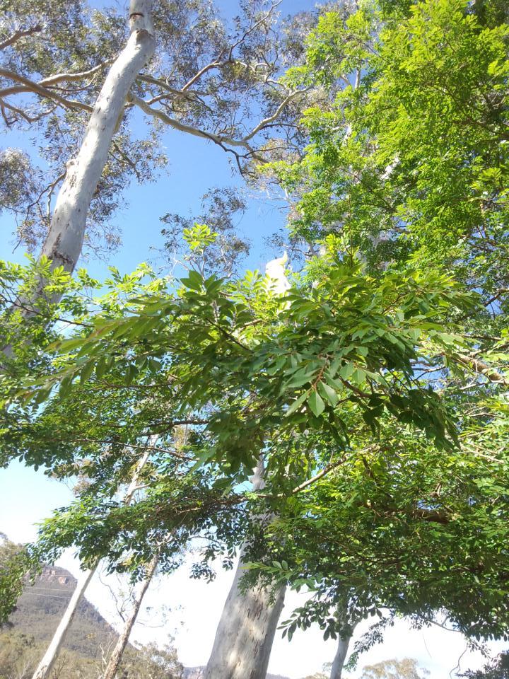 太陽を浴びる木々と青空