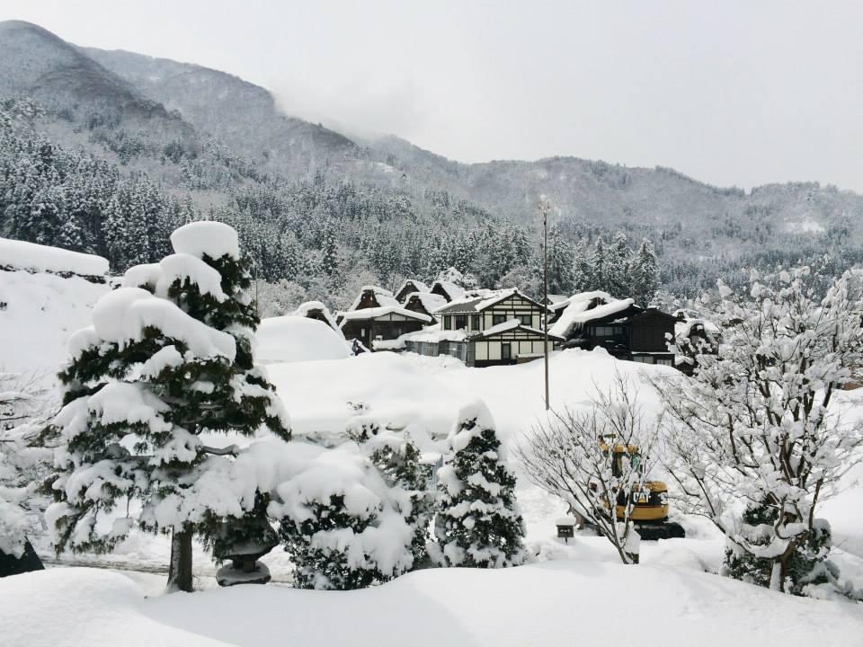 雪が降り積もる木