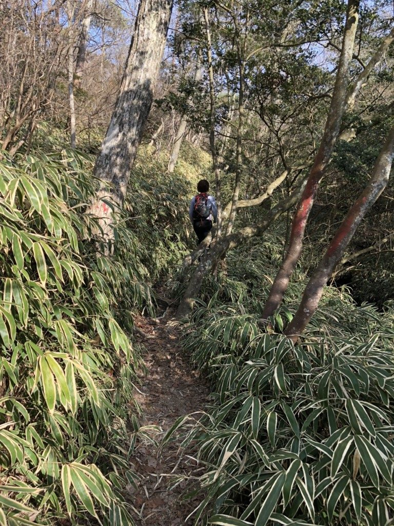 観音山トレイル