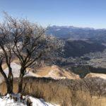 樹氷と由布院の町並み