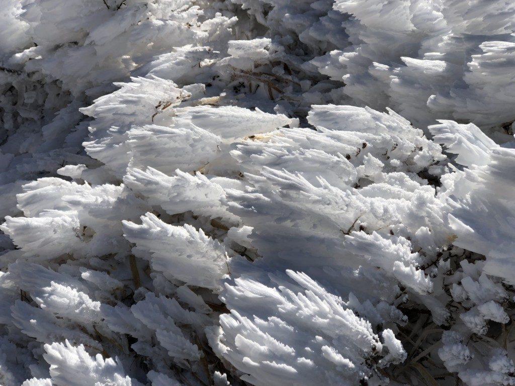 樹氷その7