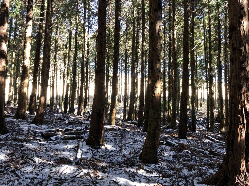 西登山口ルートの雪