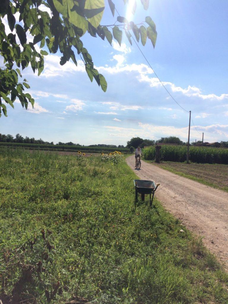 牧歌的なイタリアの畑の風景
