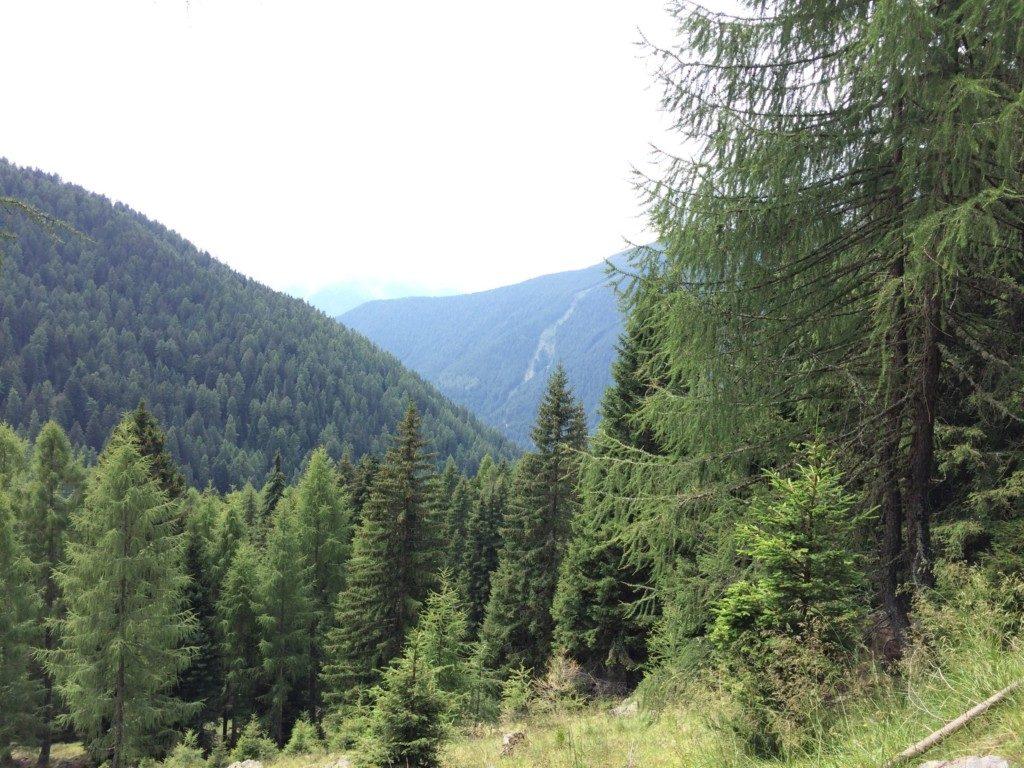 見渡すかぎりの森