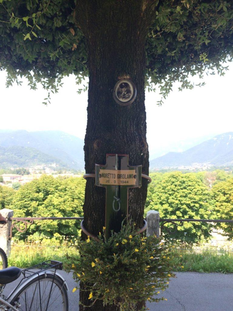 絞首刑に使われた記念樹