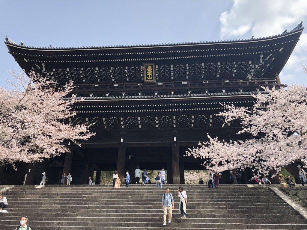 桜と知恩院正門