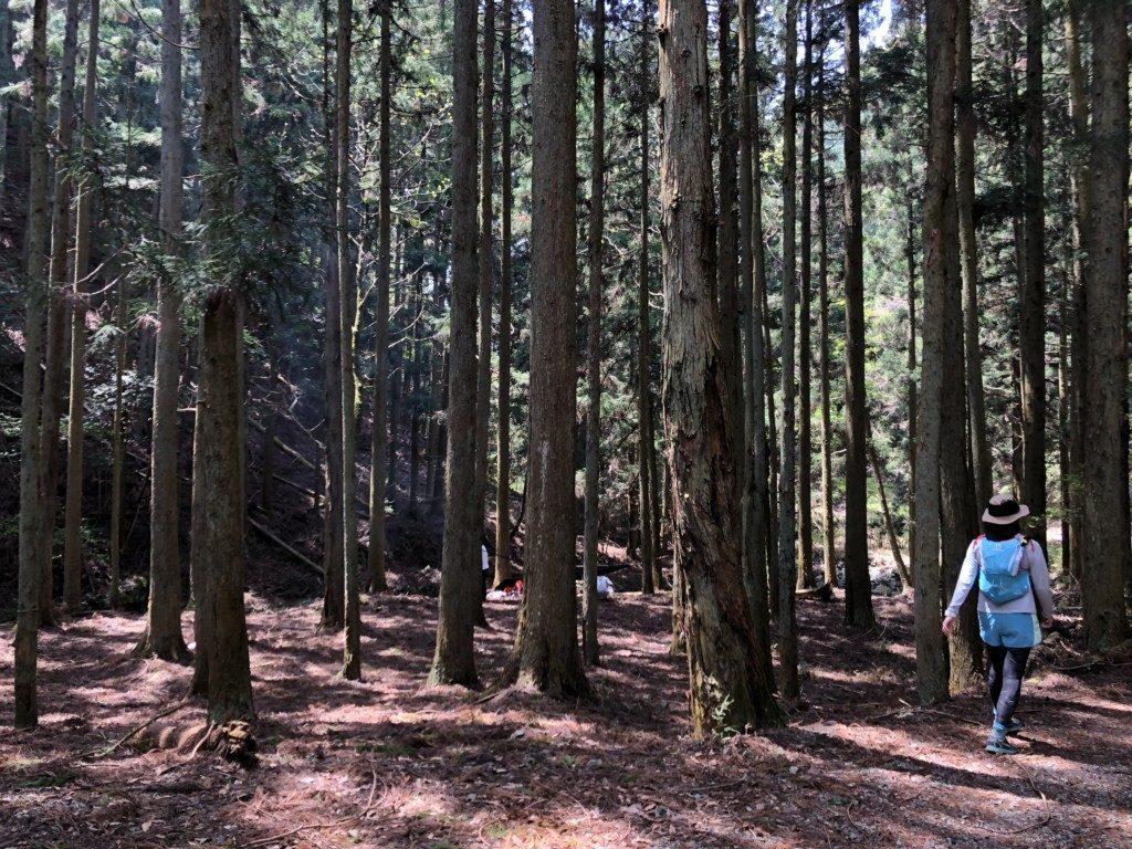 初谷渓谷コースその3