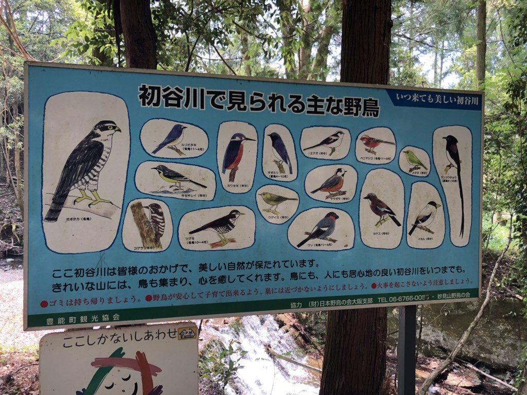 初谷側の野鳥