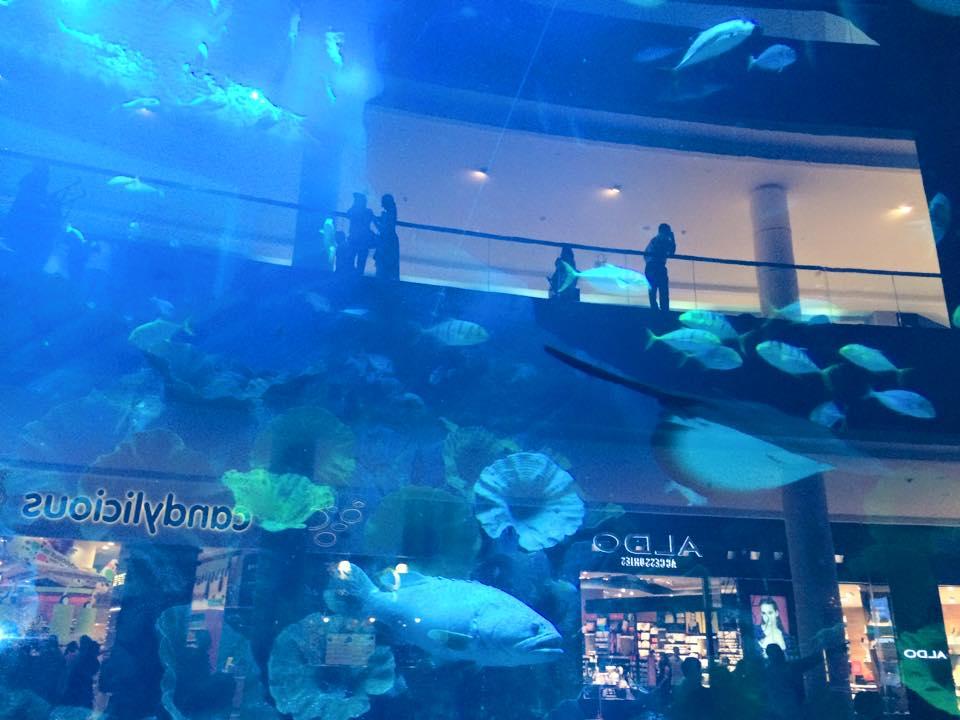 ドバイ水族館館内