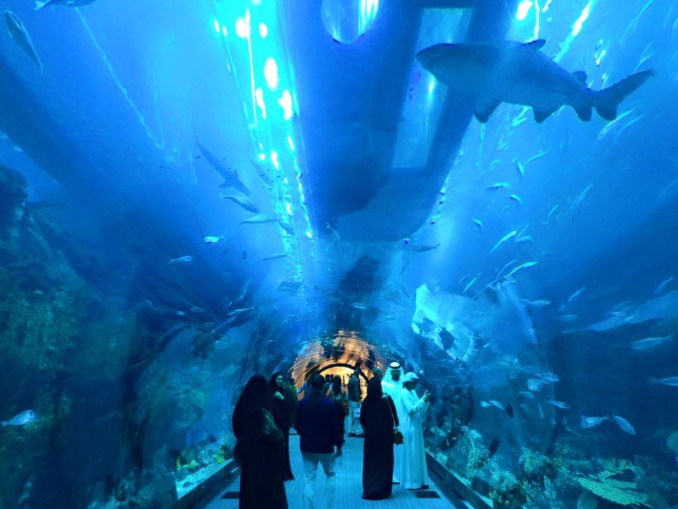 トンネル型の水槽