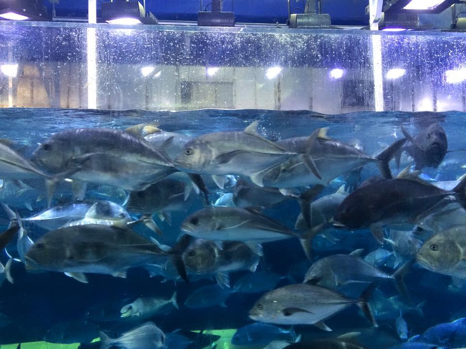 遊泳する魚