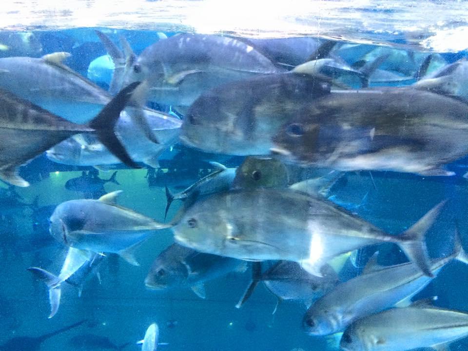 動きの速い魚