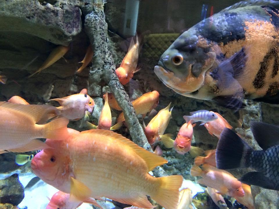 珍しい魚たち