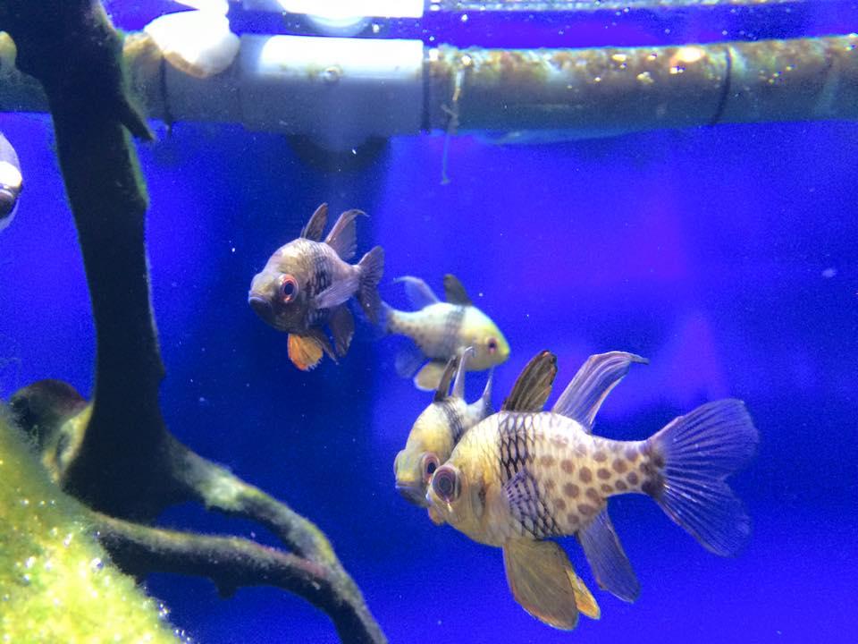 金魚のような魚