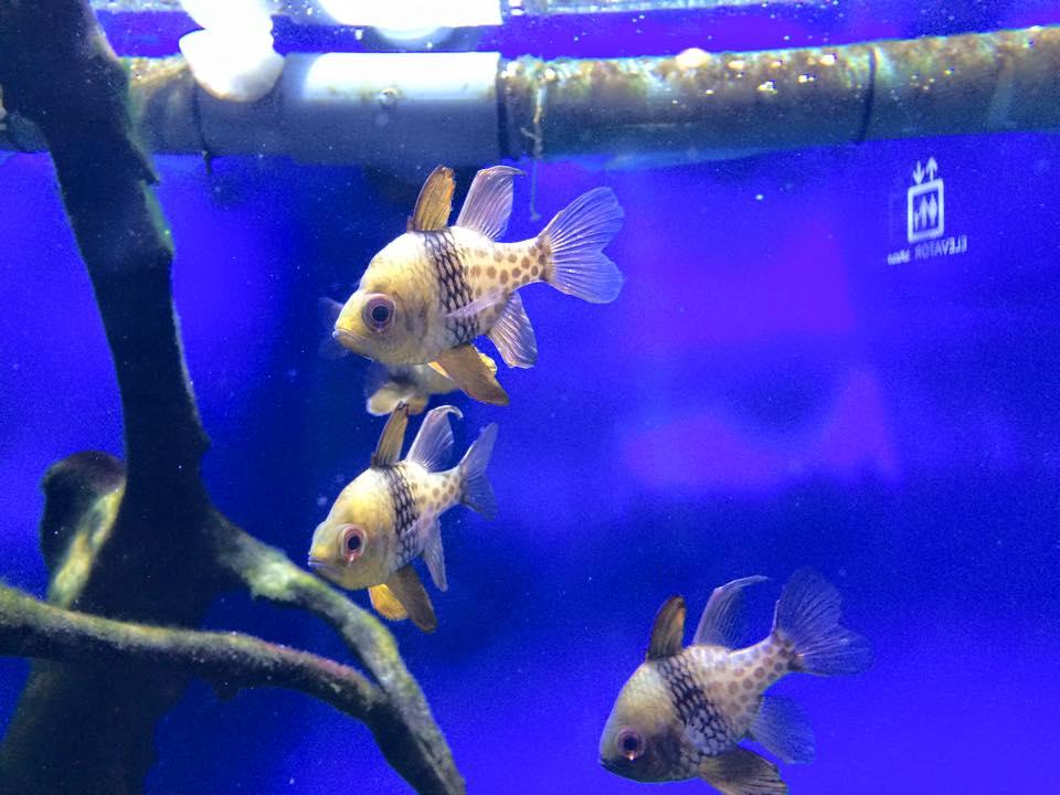オシャレな魚