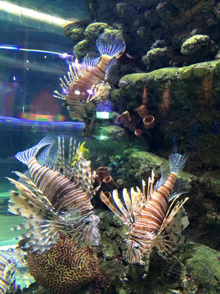 サンゴに居そうな魚