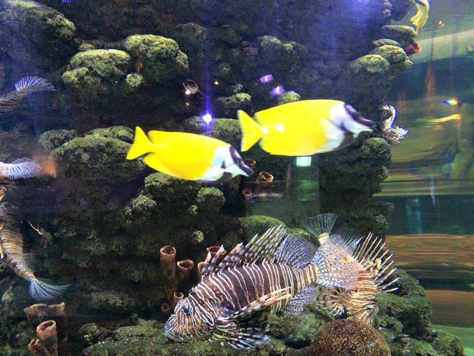 華麗な黄色の魚