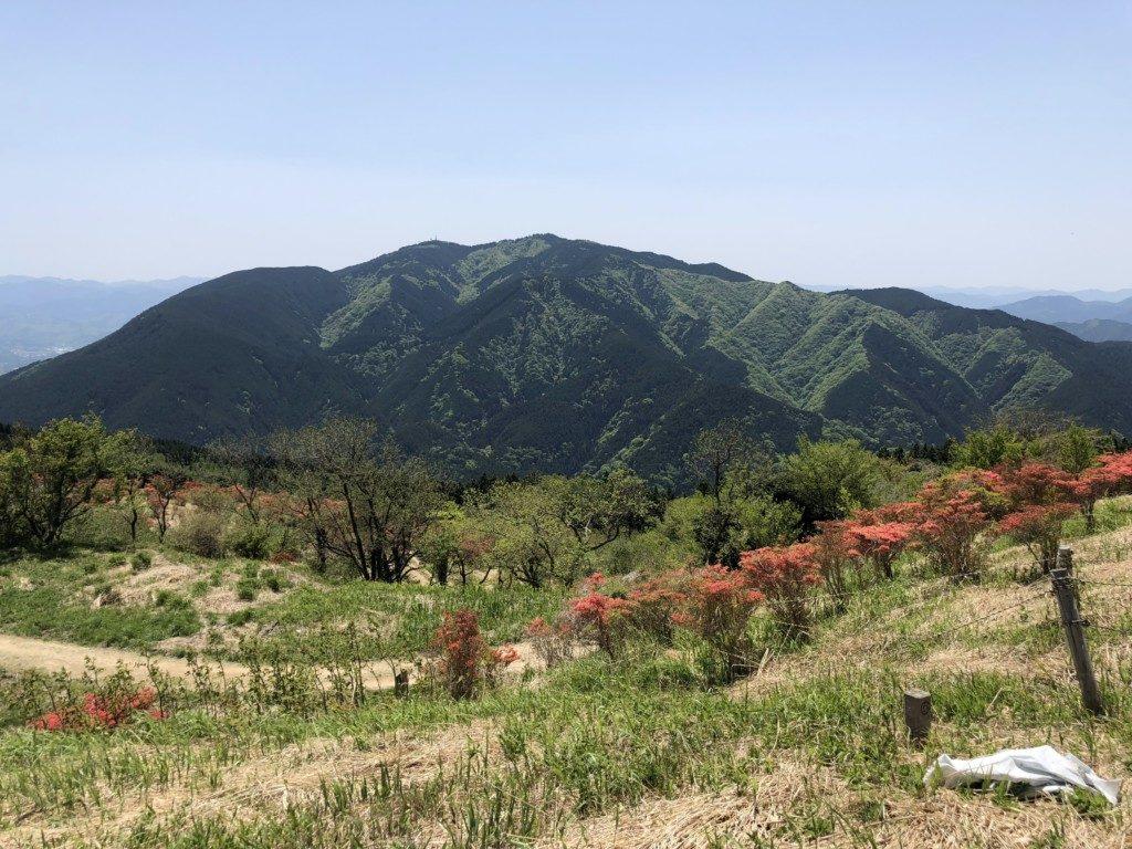 ツツジと金剛山