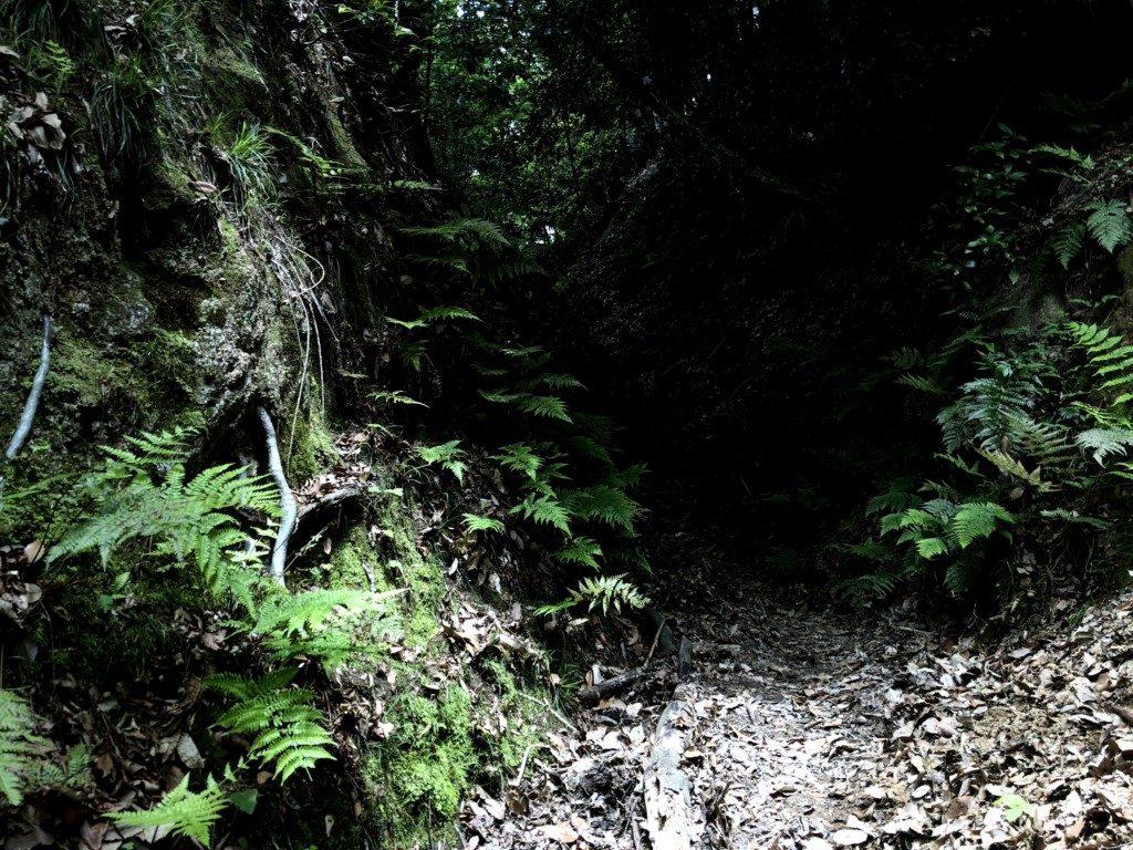 比叡山トレイル