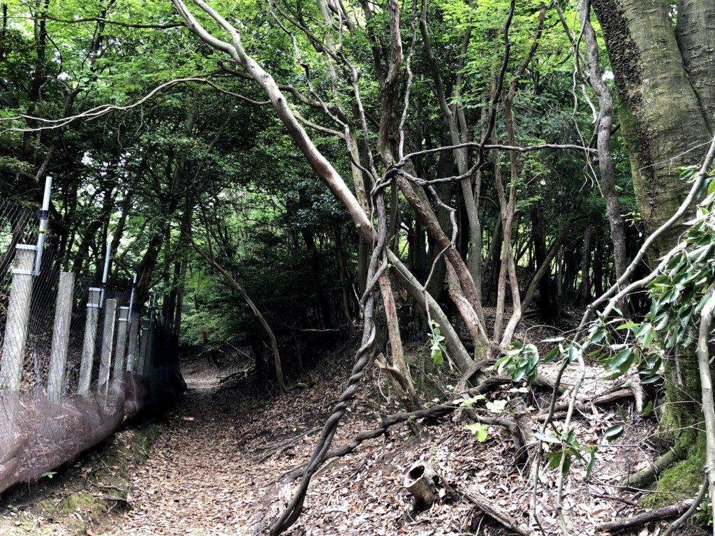 比叡山トレイルその2