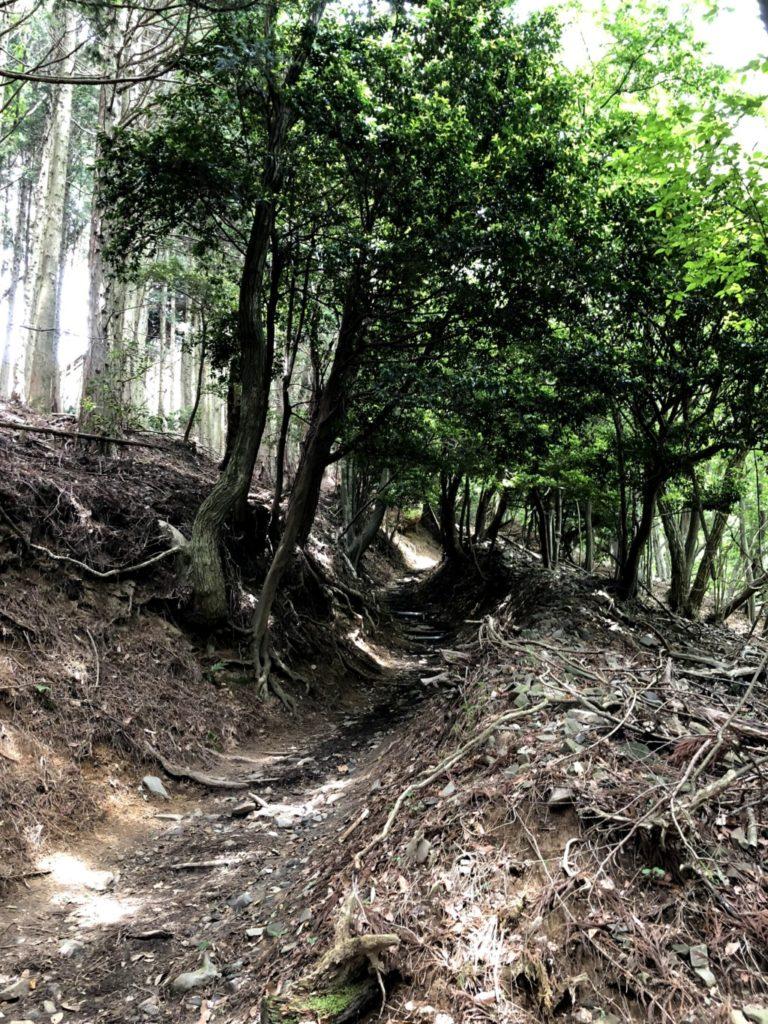 比叡山トレイルその4
