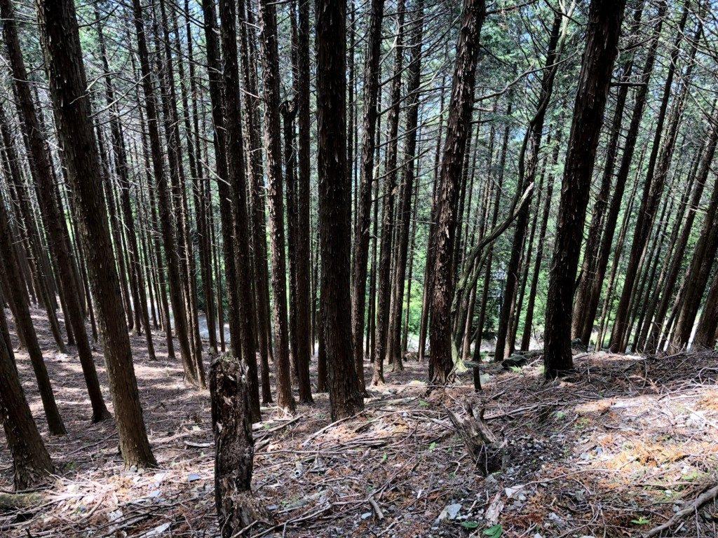 比叡山トレイルその5